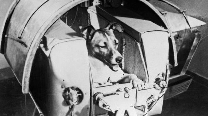 Raumfahrtgeschichte: Die tierischen Helden der Raumfahrt