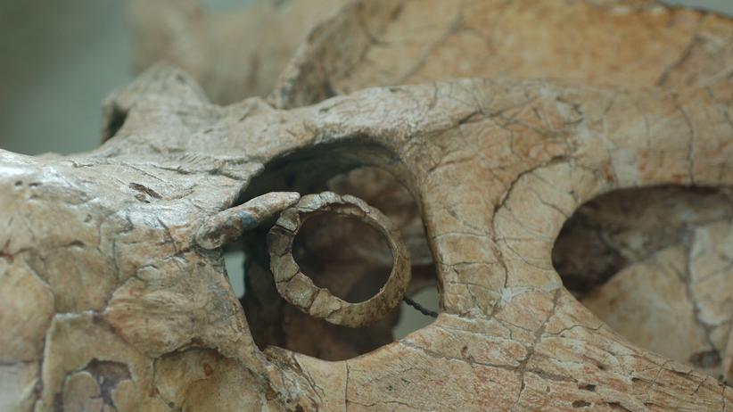 Paläontologie: Einige Saurier waren Nachtschwärmer