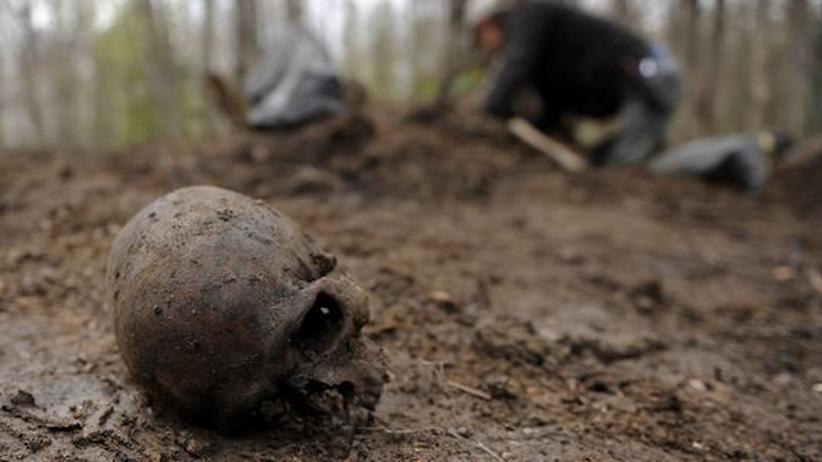 Russische Archäeologen graben im Mai 2011 in den Wäldern von Nowgorod nach den sterblichen Überresten gefallener sowjetischer Soldaten.