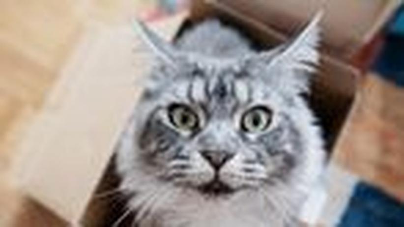 Physik-Größe: Der Katzenpiesacker namens Schrödinger