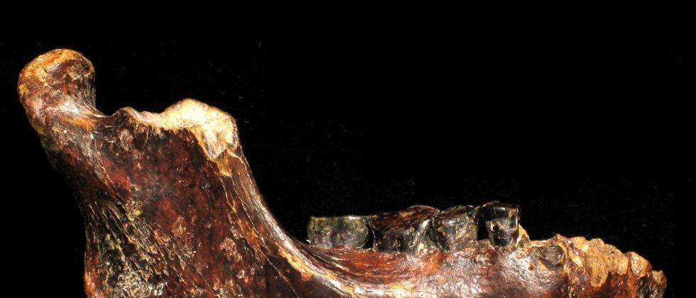 Evolution Hominine Fossil Asien Penghu 1