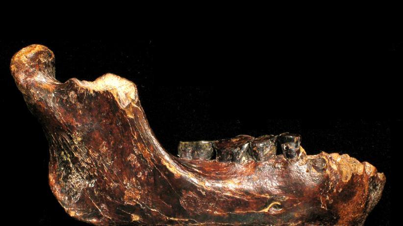Evolution: Bis(s) zum Pleistozän
