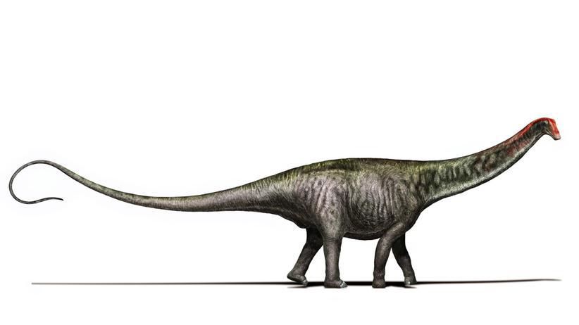 Dinosaurier Urzeit Brontosaurus Apatosaurus Langhalsdino