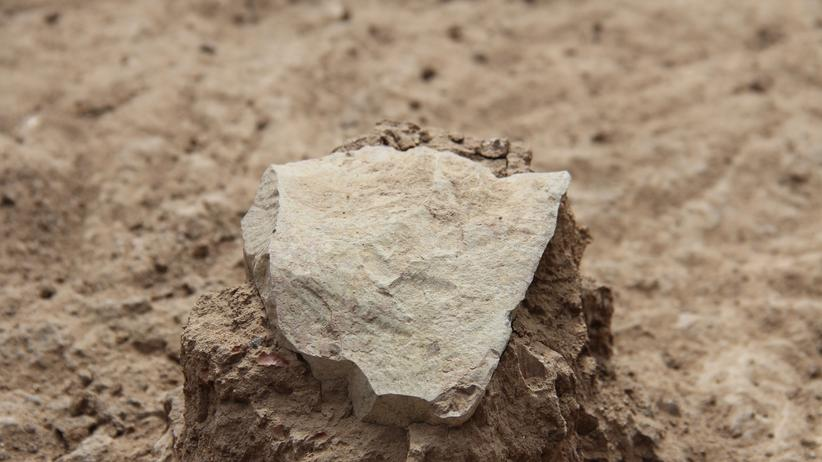 Homo habilis Werkzeug Evolution Menschheitsgeschichte