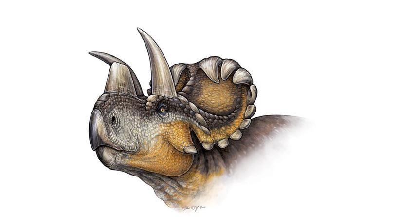 Dinosaurier Wendiceratops pinhornensis Urzeit Illustration