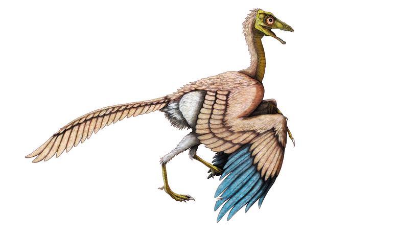 Paläontologie: Der Archaeopteryx lebte vor etwa 150 Millionen Jahren, zu Zeiten des Jura. Er gilt als der erste Vogel.