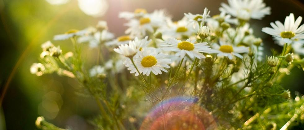 Homöopathie - Pseudomedizin aus der Natur?