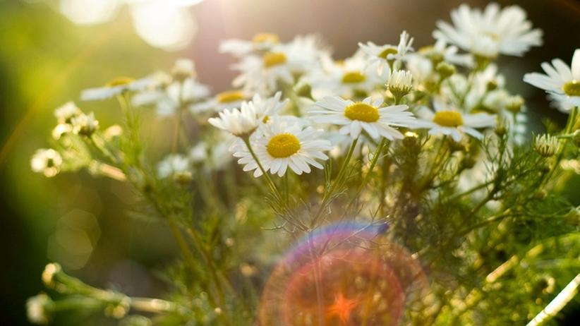 Heilmethode: Homöopathie hilft, auch wenn man nicht daran glaubt