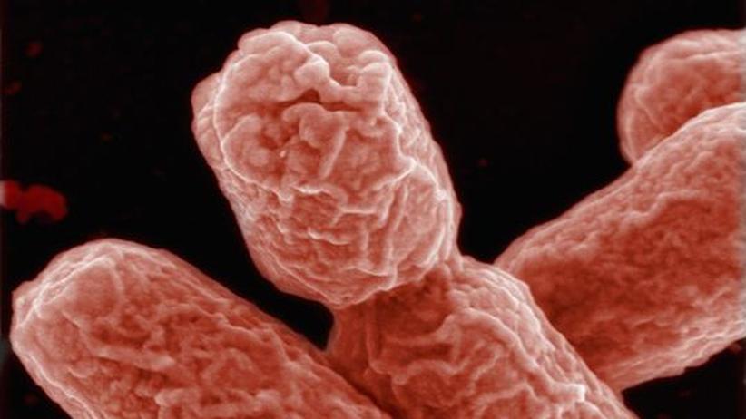"""Ehec und Infektionskrankheiten: """"Die Mikroben haben das letzte Wort"""""""