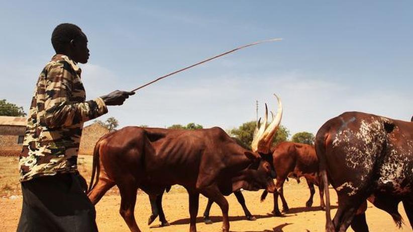 Tierseuche: Nach Jahrhunderten ist die Rinderpest besiegt