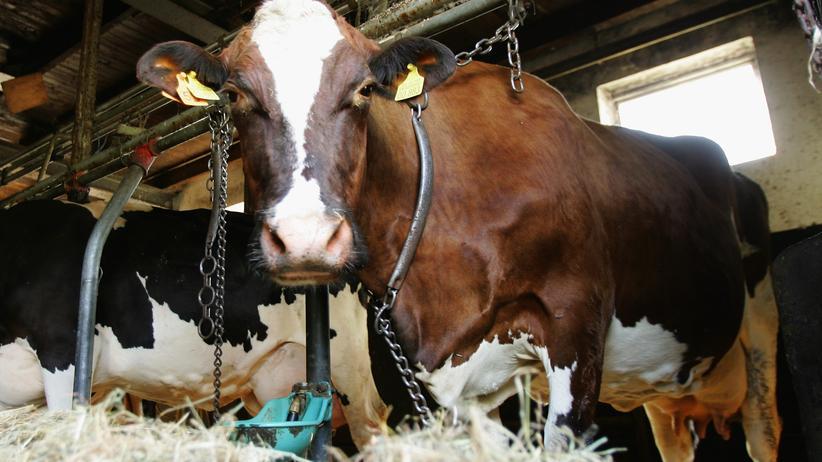 Botulismus: Die ignorierte Rinderseuche