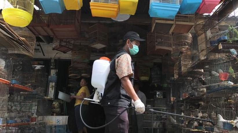 H5N1-Forschung: Vogelgrippe verbreiteter und weniger aggressiv als gedacht