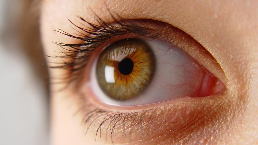 Stammzellenforschung: Neue Augen wachsen im Labor