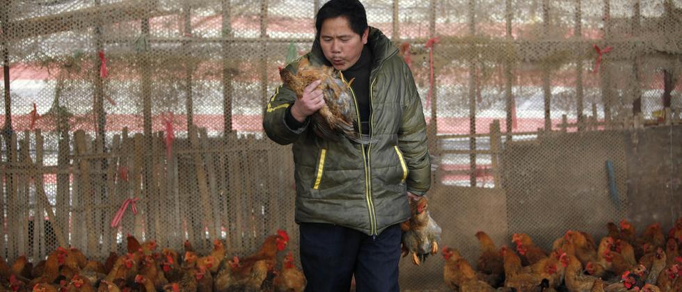 Ein Mann auf einem Geflügelmarkt in Shanghai