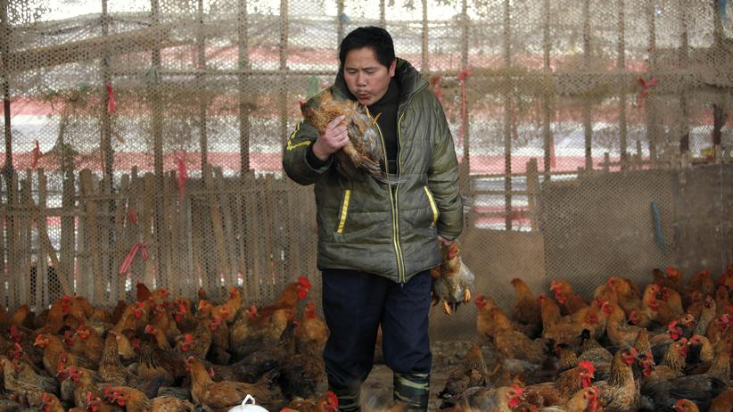 """Vogelgrippe: """"Eine Pandemie ist unwahrscheinlich"""""""