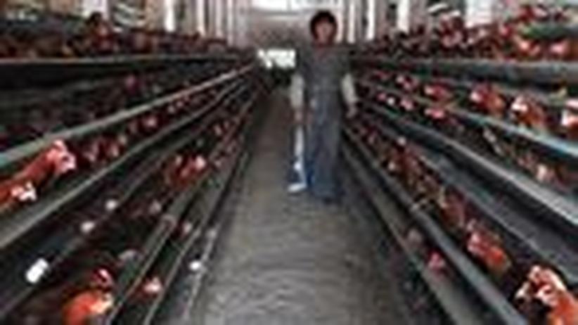 China: Zwei Tote durch neue Variante der Vogelgrippe