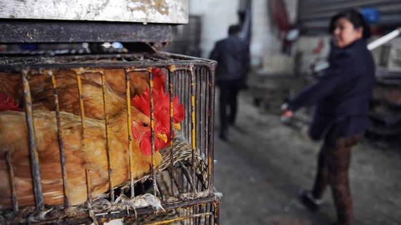 H7N9-Virus: Diese Vogelgrippe lernt, Säugetiere zu befallen