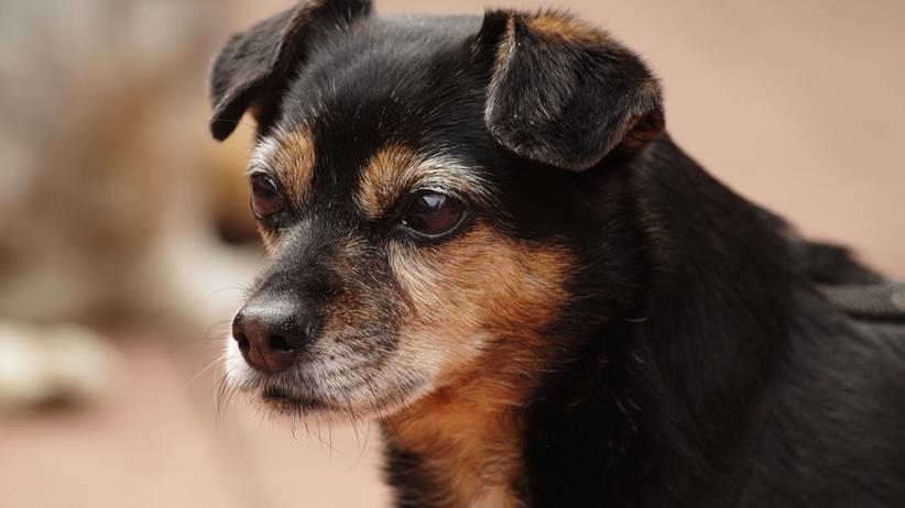 Therapiehunde: Für viele ist ein Hund die beste Medizin