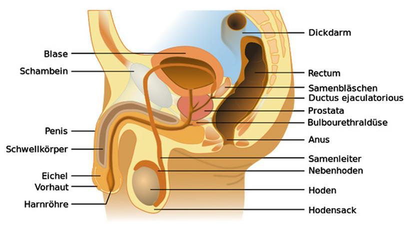 Krebsfrüherkennung: Was bringt der Check auf Prostatakrebs?