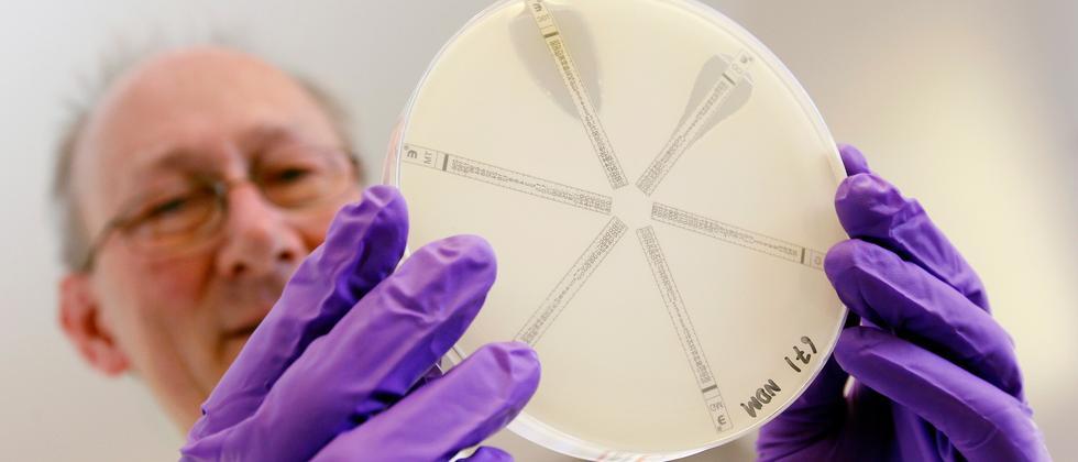 Archivbild einer Testschale mit einem antibiotikaresistenten Bakterium, das mehreren Antibiotika ausgesetzt wird.