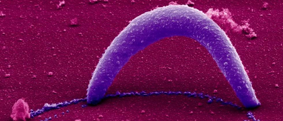 Nobelpreis, Medizin-Nobelpreis, Parasiten, Malaria, Fadenwürmer