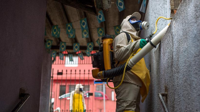 Zika-Virus: Dengue ist doch viel schlimmer!