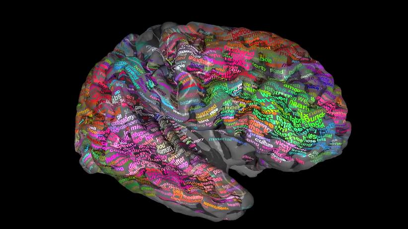 Neurowissenschaft: Unser Hirn, jetzt als Duden in bunt
