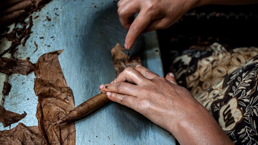 Indonesien: Eine Arbeiterin auf einer Tabakplantage auf der indonesischen Insel Java