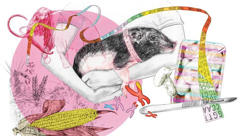 Pflanzenzucht: Ob Mais, Schwein oder Champignon: Mit der Gentechnik Crispr können Forscher das Ergbut von allem nahezu beliebig verändern.