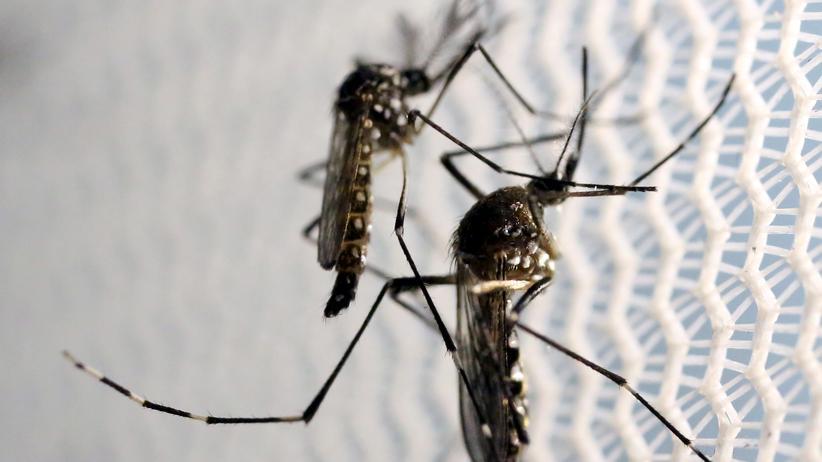 Zika-Infektionen: USA rufen Gesundheitsnotstand in Puerto Rico aus