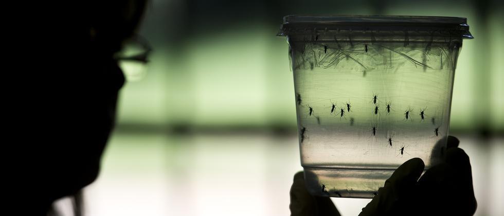 Zika Virus Mücke Südamerika