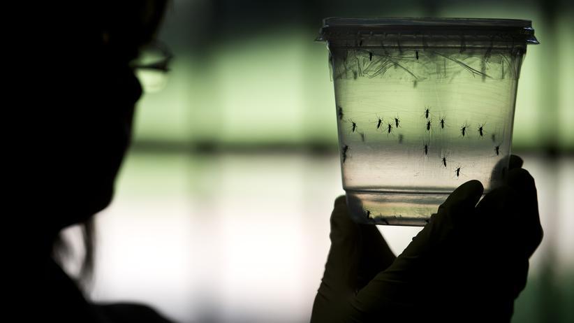 """Epidemien: """"Das Ebola-Virus ist noch in den Körpern vieler Menschen"""""""