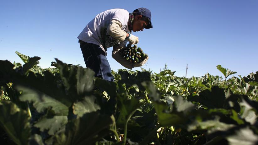 Ernährung: Woher kommt die Zucchini? In diesem Fall aus Mexiko. Viele Deutsche würden gern mehr über ihr Essen wissen.