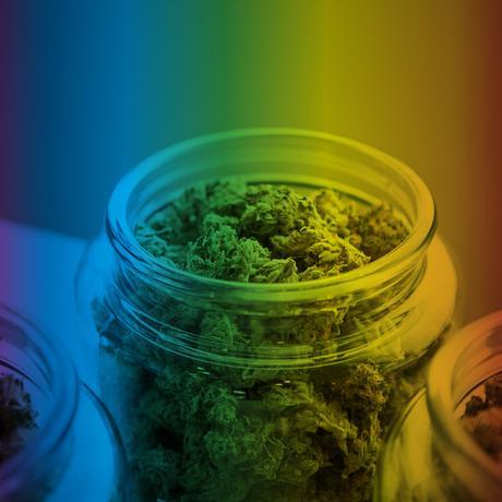 Cannabis: Legalize it! Und dann?