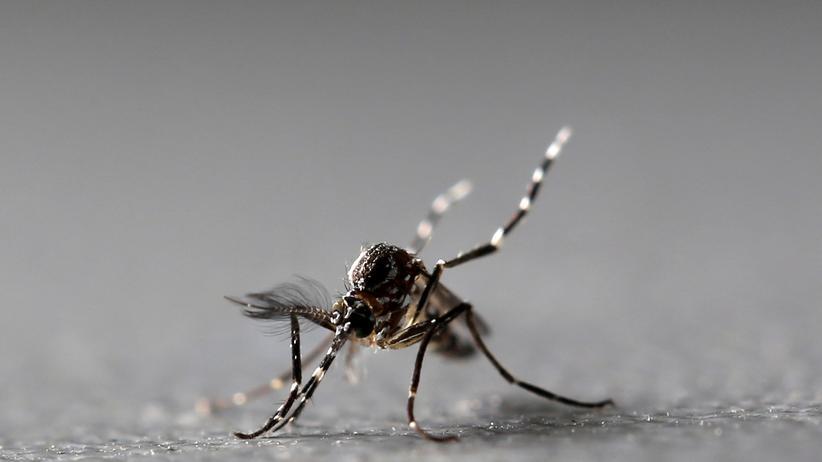 Zika-Gefahr in Brasilien gebannt