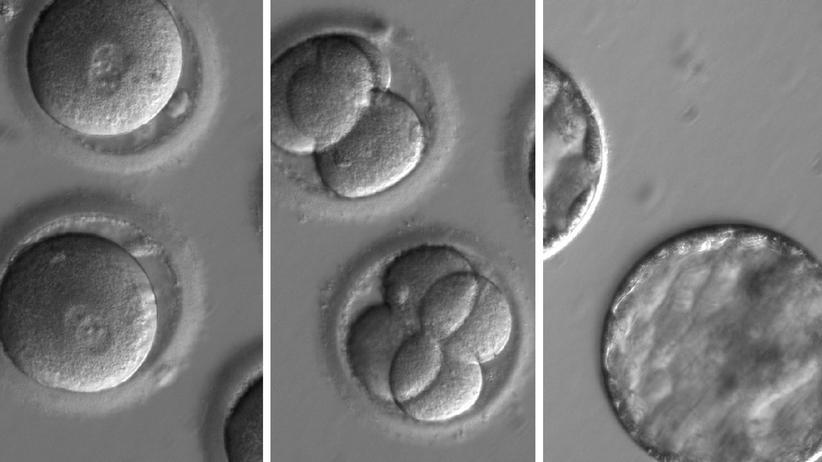 Embryonen Crispr Gentechnik Mutation