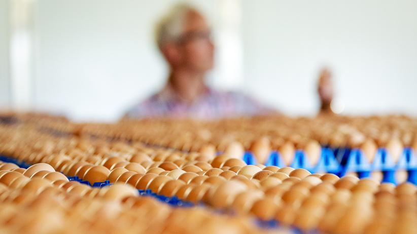 Fipronil-Belastung: Eier in einem Agrarbetrieb