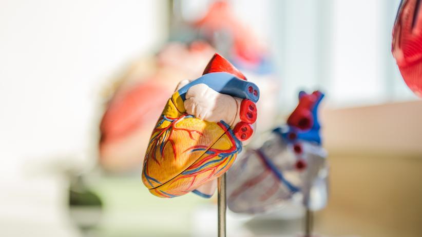 Organspende: Mehr Geld, um Spenderorgane zu finden
