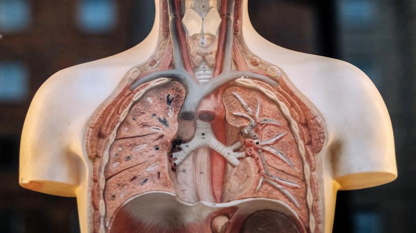 Debatte um Grenzwerte: Wie sehr belasten Schadstoffe die Lunge? Die Debatte darüber geht weiter.