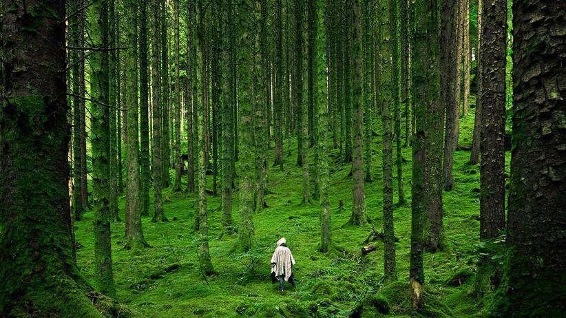 """Waldbaden: Die Natur lenkt ab. """"Der Geist ist auf angenehme Weise beschäftigt"""", sagt die Psychologin Anja Göritz."""