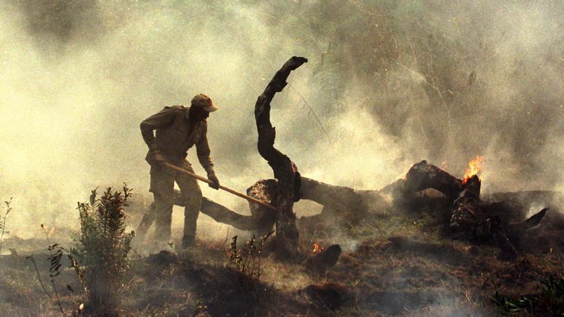 Amazonas-Waldbrände: Ein Feuerwehrmann schlägt im südwestlichen brasilianischen Apiau ein Feuer aus.