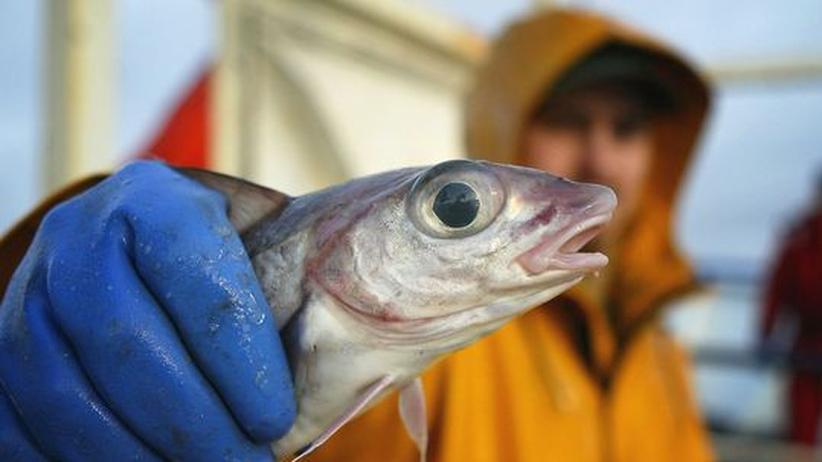 Fischerei Umwelt Meeresforschung Klimawandel Überfischung Ozeane
