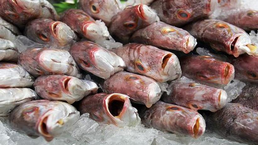 Fischerei und Artenschutz: Im Kampf gegen die Ausbeutung der Meere