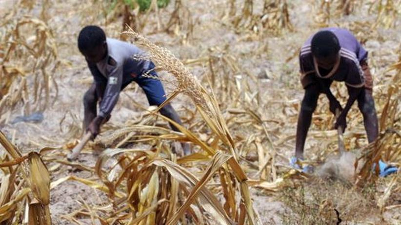 Nahrungskrise: Globaler Kollaps durch Hungersnöte?