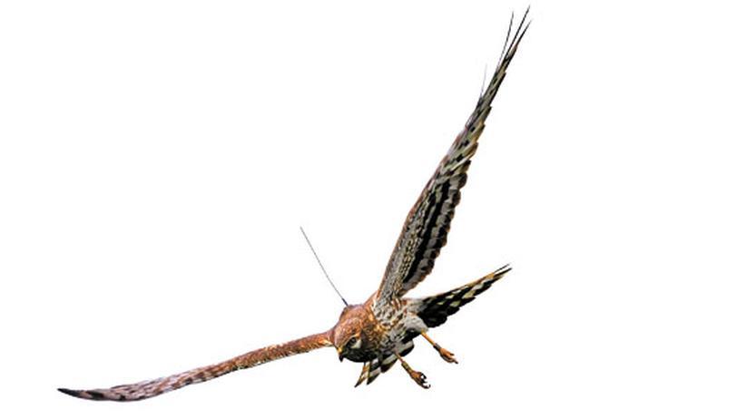 Naturschutz: Fliegender Sensor