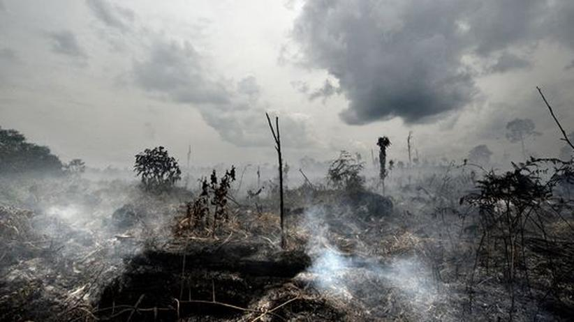 Brandrodung auf Sumatra