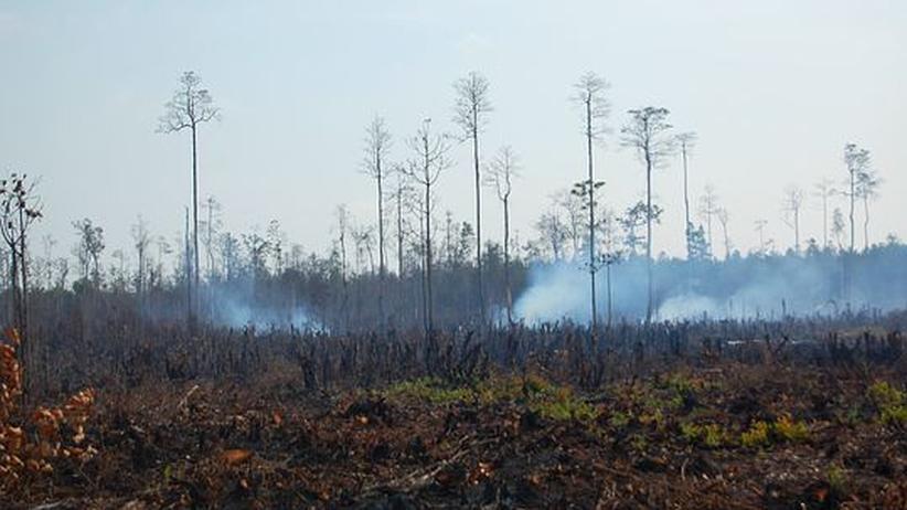 Borneo Waldbrände Kalimantan Regenwald Torfmoorwald Klima CO2