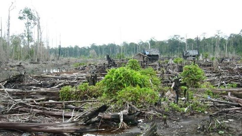 Zerstoerter Moorwald auf Borneo