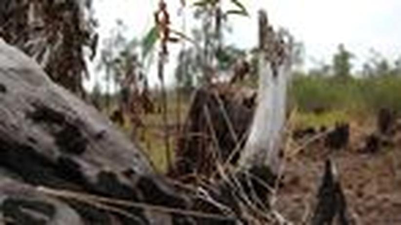 Feuerwehreinsatz im Sumpf: Brände auf Borneo bedrohen das Weltklima