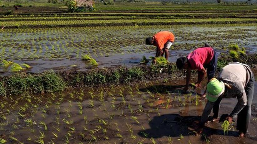 Welternährung: Genügend Nahrung zu gewinnen, ist oft mühsam